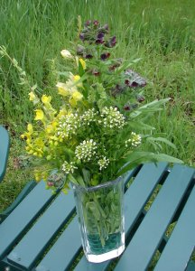 Bouquet of noxious weed flowers